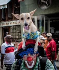 Dogs in Havana Cuba